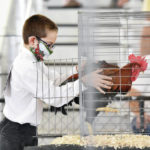A horse and a rooster at the Auglaize County Fair