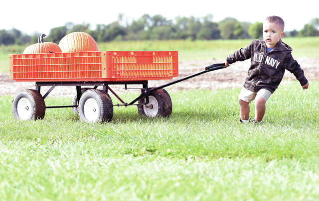 Nolan Ernst, 2, of Sidney, son of Erica and Ben Ernst, tries in vain to pull a cart filled with pumpkins that he and his grandpa, Dan Ernst, picked in the pumpkin patch at Crossway Farm on Tuesday, Sept. 15.