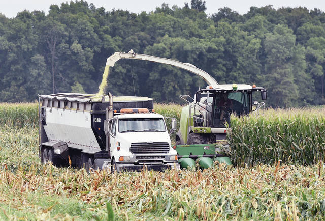 Still green stalks of corn are chopped up by a combine and poured into a following truck in a corn field located along the 8400 block of Mason Road on Thursday, Sept. 17. Corn stalks which are still green are often chopped up by farmers as animal feed.
