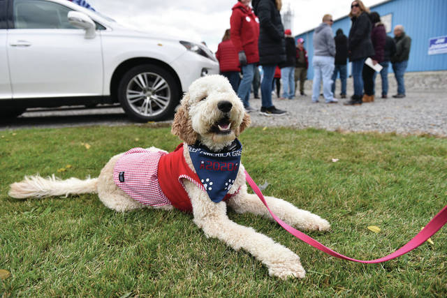 A Golden Doodle named Kimber, owned by Brittany Jackson, of DeGraff, waits for the Team Trump Bus to arrive at Precision Custom Products, Inc. near De Graff on Friday, Oct. 30.