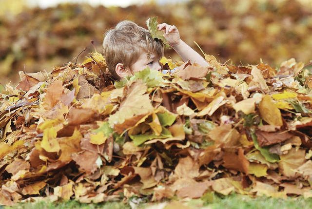 Dax Goheen, 3, of Sidney, son of Marisa Adams and William Goheen, sits in a pile of leaves raked by his mom. Dax was playing with his brother, Liam Goheen, not pictured, in the pile of leaves along N Ohio Avenue on Monday, Nov. 9.
