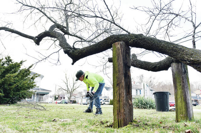 Nathan Peterson, 12, of Sidney, son of Amber and Jonathan Lewis, picks up sticks around what he was told is a peach tree, in a yard along Broadway Avenue on Wednesday, March 17. Two pieces of wood have been placed under the tree to keep it from falling down. Peterson does odd jobs for the property owner, including mowing the grass.
