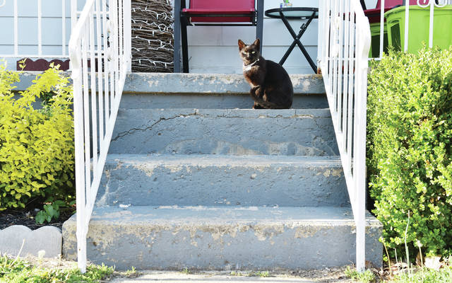 A cat sits on the steps of a house in downtown Sidney on Wednesday, April 14.
