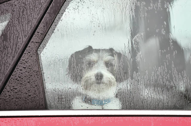 A dog looks out a rain covered car window as it patiently waits for its master in the Sidney-Shelby County Health Department parking lot on Thursday, April 29.