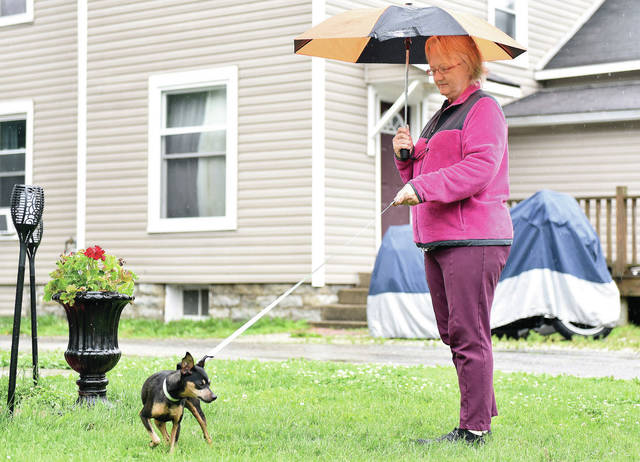 Debbie Thomas, of Sidney, takes her miniature pincher out for a walk near South Main Avenue in the rain on Wednesday, June 2. Thomas said the dog isn't bothered by rain.