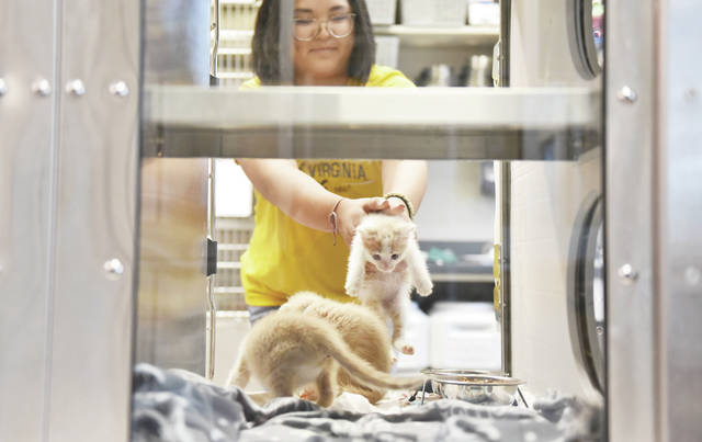 Ava Westfall, of Sidney, puts a kitten back into its cage at The Bob Sargeant and Family Shelby County Animal Shelter on Wednesday, June 30. Westfall is a volunteer at the shelter who comes every Wednesday to socialize kittens so that they are comfortable being handled by humans when they are adopted.