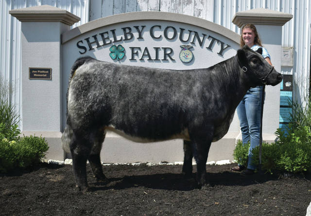 UVCC FFA member Aiden Belle Brautigam, 17, of Sidney, daughter of Andy and Angie Brautigam, won grand champion beef breeding heifer at the Shelby County Fair.