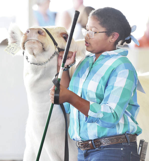 Maya Oduroll, of Piqua, 11, daughter of Charles and Tracy Oduroll, shows in short horn breeding at the Shelby County Fair on Sunday, July 25.