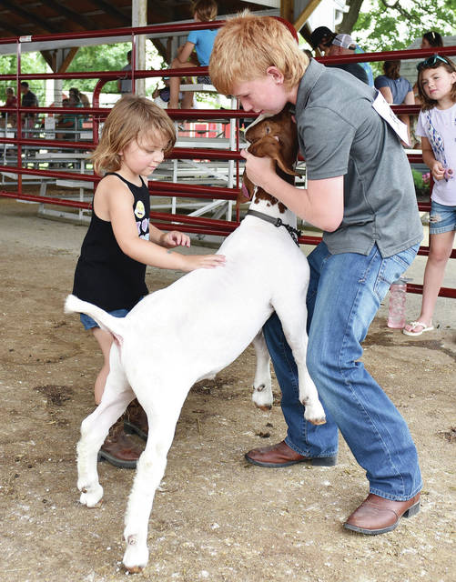 Miracle Salmons, left, 3, gets some market goat showing pointers from Hunter Messer, 11, both of Anna, at the Shelby County Fair on Thursday, July 29. Miracle is the daughter of DJ Salmons and Tiffany Peters. Hunter is the son of Jackie Salmons and Rodney Messer.