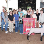 Steer, lamb and goat champion sale