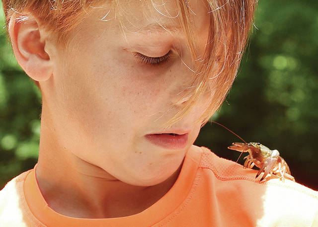 Jameson Lacy, 10, of Sidney, reacts to a crayfish he let his sister, Caroline Lacy, 13, put on his shoulder while they were out catching crayfish in Tawawa Creek on Thursday, July 1. Jameson and Caroline are the children of Melissa and Aaron Lacy.