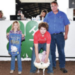 Champion animals auctioned off Friday