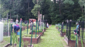 People's Garden gets geared up for fall gardening season