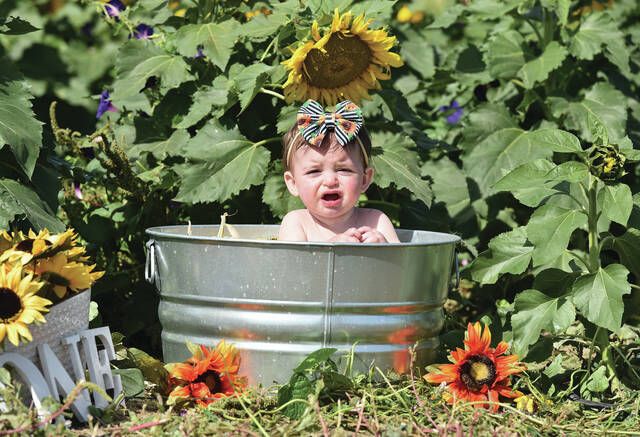 Aubrey Buehler, 11 months, sits in a milk bath at CrossWay Farms while her mother, Amy Buehler, both of rural Sidney, took photos of her with her phone on Thursday, Sept. 30. Amy spent the day taking different photos in anticipation of Aubrey turning one-year-old. Amy also bought a cake and took pictures of Aubrey stuffing her face with fistfuls of cake. Along for the ride was Aubrey's older sister Aria Buehler, 2. Both kids are also the children of Andy Buehler.