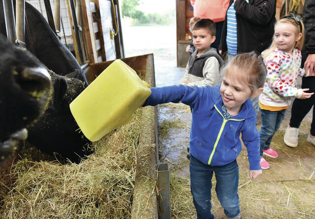 Emry Goins, front, 3, of Sidney, dumps a cup of hay into a feeding trough for some cows at Allen Farms on Wednesday, Oct. 13. Watching Emry are Braxtyn Franklin, left, 4, and Ivy Payne, 4, both of Sidney. The field trip was taken by children enrolled at Sidney Co-op Nursery. The kids learned about farm life which included sitting on tractors and going for a hayride. Allen Farms is located along Wapakoneta Avenue. Emry is the daughter of Kiersten and Zach Goins. Braxtyn is the son of Jessica Wright and Phillip Franklin. Ivy is the daughter of Deanna and Chris Payne.