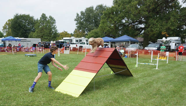 Donovan DeCoster of the Powell Sew & Sows club leads his dog over the A-frame on the agility course at the Delaware County Fair on Monday. Donovan had one of the faster times of the day.