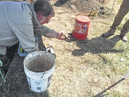 Dr. Richard M. Gramly examines artifacts found in Morrow County this month. The retired anthropology professor spent a week in Morrow County recently helping unearth and identify mastodon remains and tools associated with that era thousands of years ago.