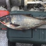 The cost of containing Asian carp