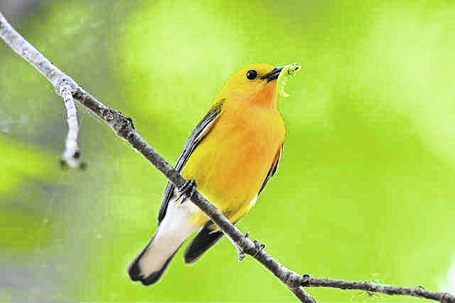 A warbler is among the birds filmed by local wildlife enthusiasts.
