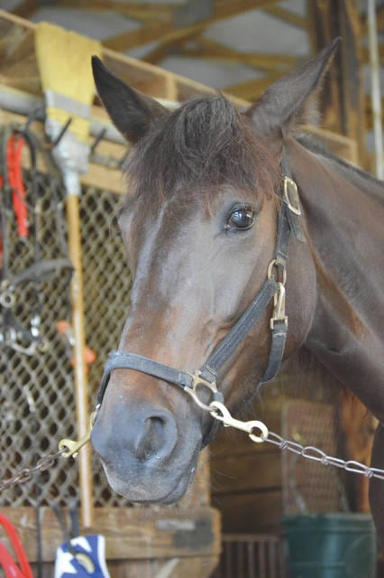 Tinkpot, a 2-year-old filly trotter, will compete for the Impson Family racing stable in this year's Greene County Fair harness races, Aug. 2-3 in Xenia. The Impson family have been competing in harness races since the 1950s.