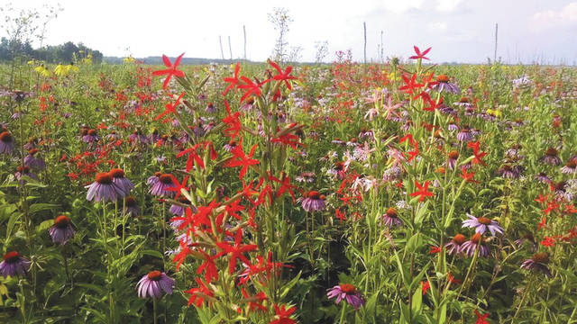 "Submitted photo The Huffman Prairie is home for native species of plants and animals in Ohio. An ""Explore Huffman Prairie"" walking tour will be held 11 a.m. Tuesday, July 31 at the Huffman Prairie."