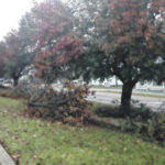 The Ice Storm caused damage