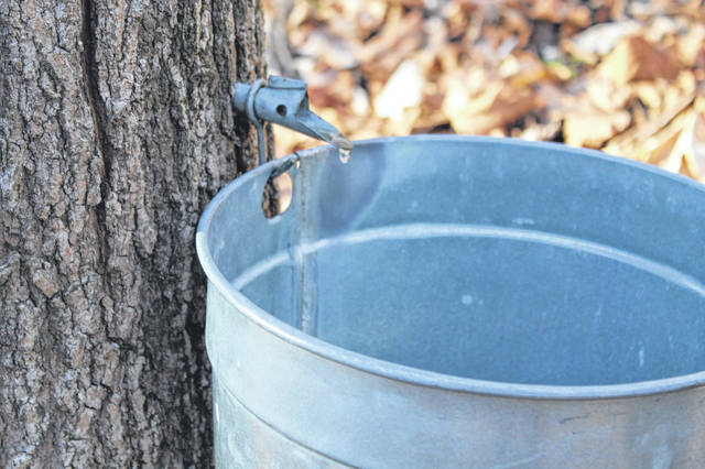 File photos Families can rent their very own sugar bucket to collect sap this winter.