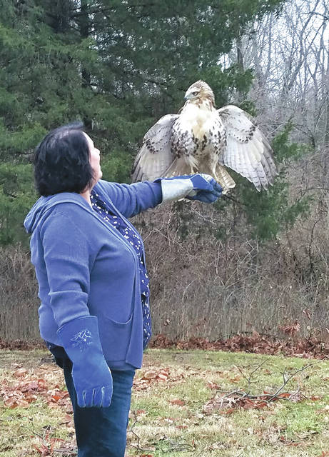 An official from the Glen Helen Raptor Center shares a moment with the raptor before he is sent back to the wild.