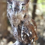 Nature preserve to release owls