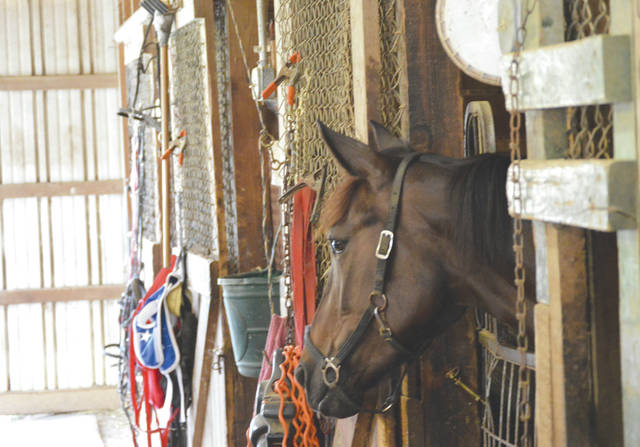 The Impson family-owned horse Tinkpot looks out from its stall, Thursday July 27 at the Greene County Fairgrounds. The Impson family, of Cedarville, have been involved in harness racing since the mid 1950s.