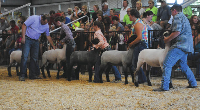 The Greene County Fair hosted its annual sheep homegrown show July 31, followed by the sheep market show.