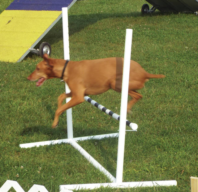 Greene County Fair dog show entertained the crowd.