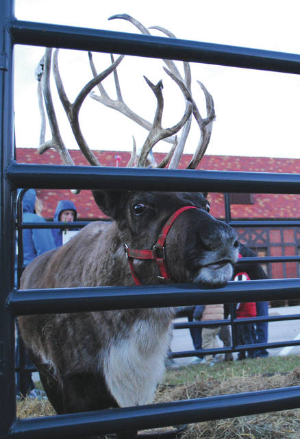 Reindeer made an appearance for the first time this year at the annual event.