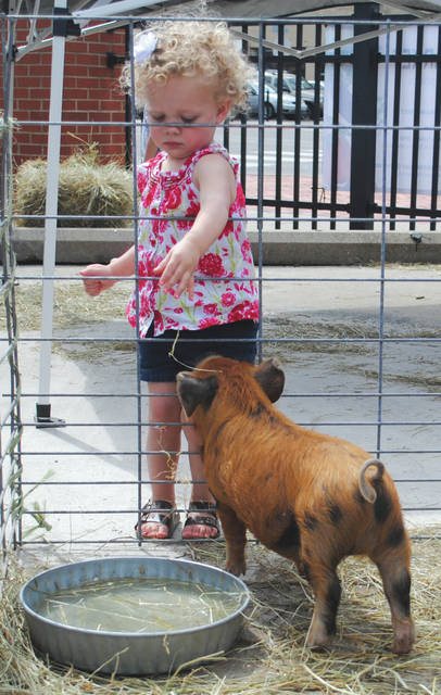 Whitney Vickers | Greene County News The Fairborn Farmers Market opened for the springs season May 2 and featured baby goats and pigs available for petting. Pictured are local children taking advantage of the opportunity.
