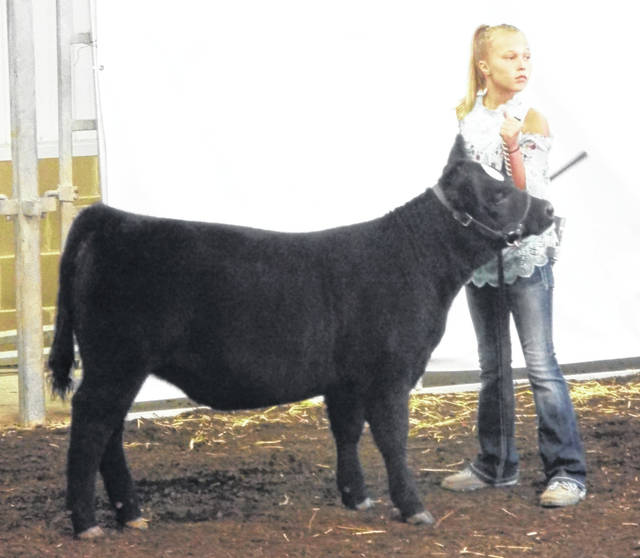 Sydnee Hawkins participated in calf showmanship, but had to leave early to compete in a final round of swine showmanship. Hawkins received 2nd place. The judge was looking for the exhibitors to focus on their calf, keep their calf's head up, and be able to handle the halter properly.