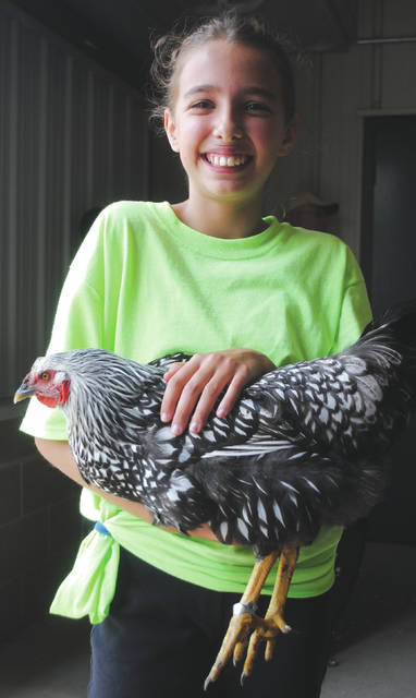 Addison Smart showed chickens for the first time this year.