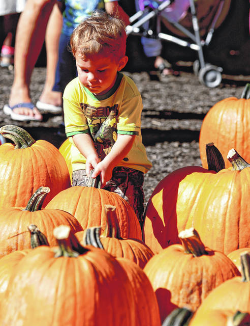 File photo Festival-goers can pick a pumpkin from the pumpkin patch at Young's 42nd Annual Fall Farm Pumpkin Festival Saturday-Sunday, Oct. 6-7.