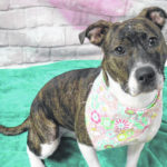 Dog of the week: Angelica