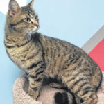 Cat of the week: Raylee