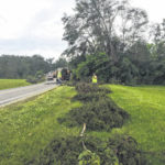 Officials release final 'put-out' date for tree, brush debris