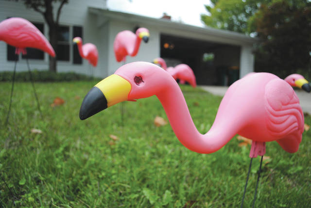 File photo The Fairborn Music Club is hosting its annual pink flamingo flocking fundraiser.
