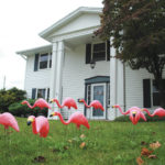 Flamingos to flock into Fairborn