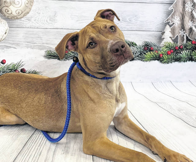 Photo courtesy GCAC Willow is a female hound mix, about 1 to 2 years old with brown coloring. She's been spayed and vet checked and can be visited at Greene County Animal Care & Control. Willow is ready to be adopted.