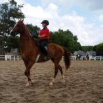 Equine champions put on a show