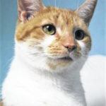 Cat of the week: Clementine