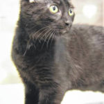 Cat of the week: Pinot