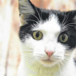 Cat of the week: Cruiser