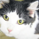 Cat of the week: Jekyll