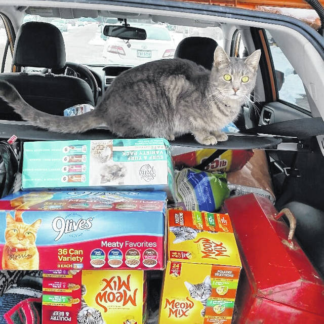 Blue, Fairborn TNR founder and director Janet McKenzie's cat, perches on top of supplies that will go towards helping hundreds of stray cats all around the city of Fairborn.