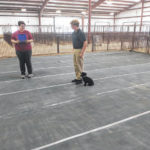 Canines display obedience skills